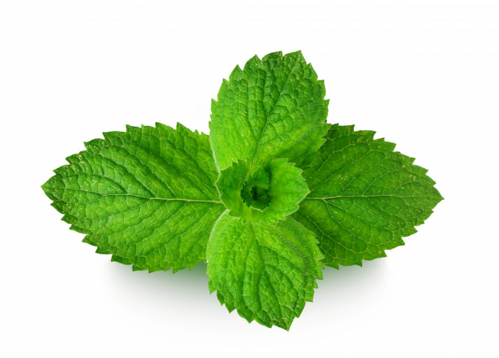 images of mint leaves on a plain white background